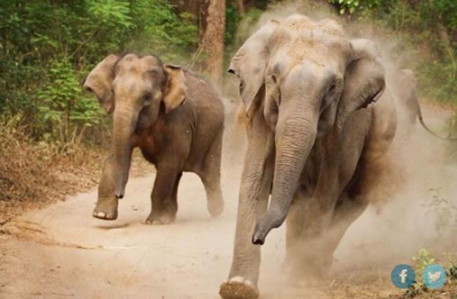 Ελέφαντας έφηβος σεξ